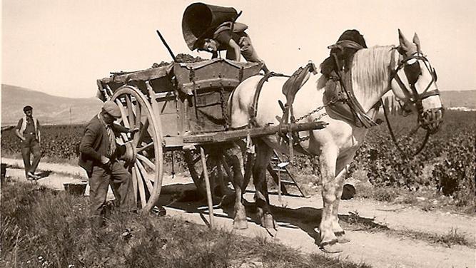 Notre arrière-grand-père avec le cheval de l'exploitation.