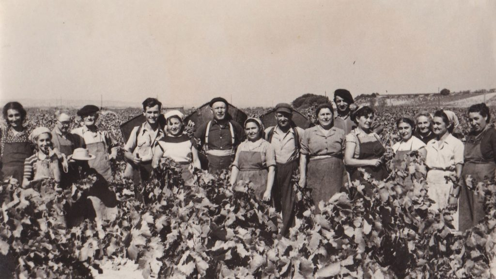 Equipe de vendangeurs dans les années 50